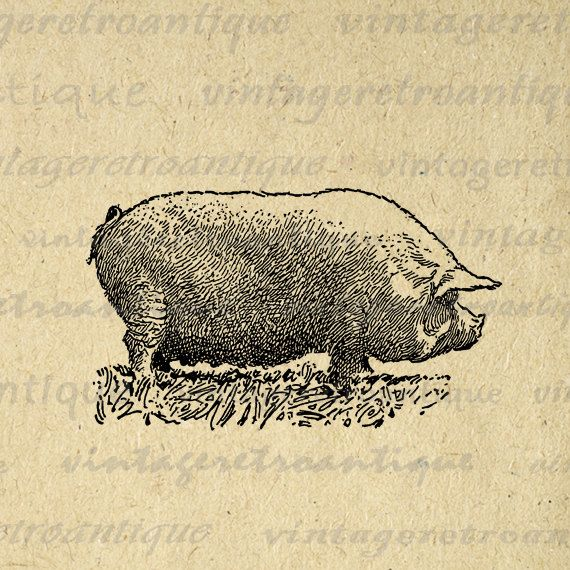 Antique Pig Digital Graphic Image Illustration Download Printable Vintage Clip Art for Transfers Printing etc HQ 300dpi No.3255