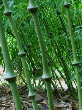 Plant Like A Bamboo Essay Checker - image 3