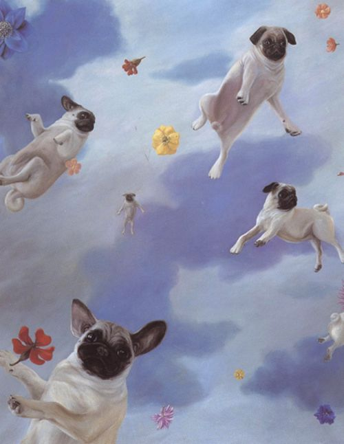 """For all the NZ'ers out there...    """"And Pugs Might Fly.""""    (Lithian Ricci)"""