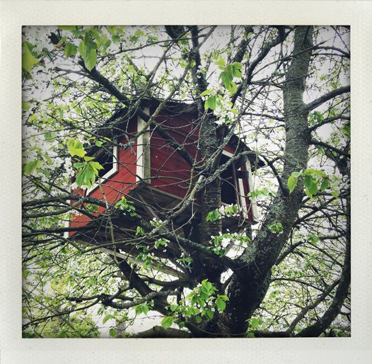 Cherry blossom tree house.