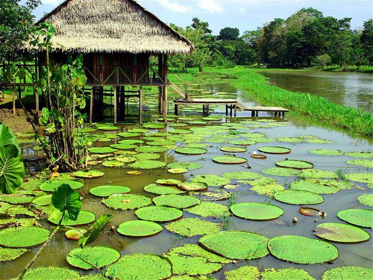 'Victoria amazoónica', en los lagos de Yahuarcaca, en Leticia (Amazonas). #COLOMBIA