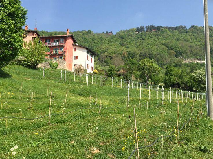 Frutta esotica coltivata sui colli di Bergamo