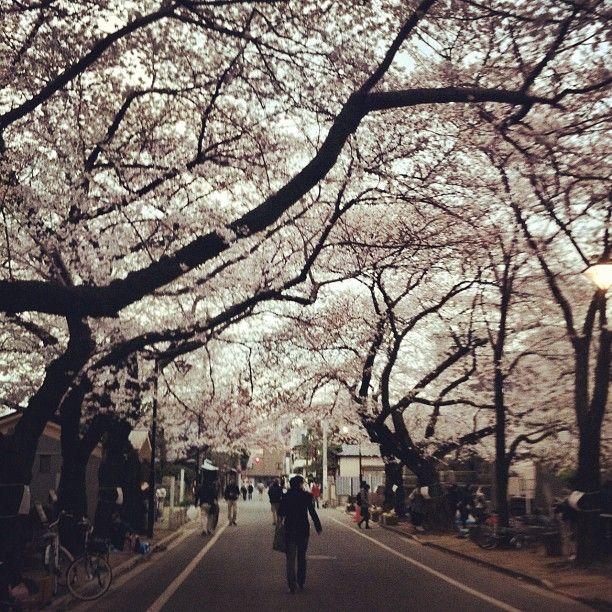 東京都立谷中霊園 in 台東区, 東京都 Yanaka Cemetery
