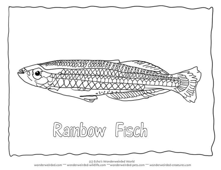 Rainbow Fish Coloring Page,Australian Rainbow Fish to Madagascar Rainbow Fish