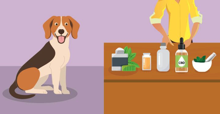 Seizures In Dogs Natural Options That Work Dog Seizures