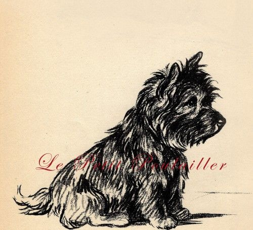 1937 Lucy Dawson Canine Cairn Terrier Dog Portrait of 'Mac'