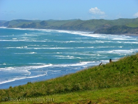 Raglan Beach, Waikato, NZ. As seen in the movie Endless Summer. Known for it's left hand surf point break