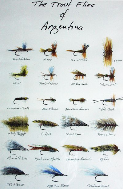 flies of Argentina