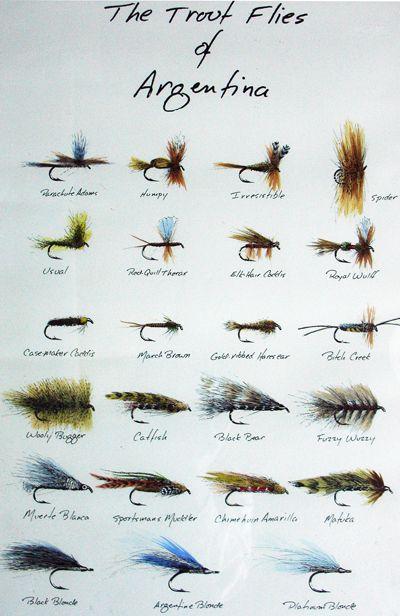 flies of Argentina
