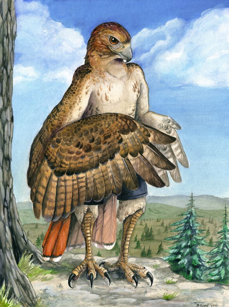 Red-Tailed Hawk Anthro by windfalcon.deviantart.com