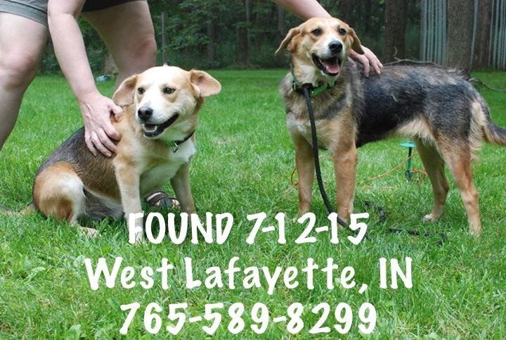 Pin by us lost dog registry on black and tan dogs us