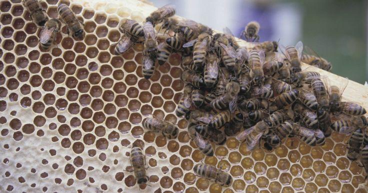 Como remover cera de abelha das roupas. A cera de abelha é usada para fazer velas, como um impermeabilizador usado em alguma peças de artesanato pintadas e é também um dos principais ingredientes em diversos produtos de banho caseiros. Independentemente de sua utilização, essa substância tende a fazer bastante sujeira quando derretida. Não raramente, ela costuma cair sobre as roupas e ...