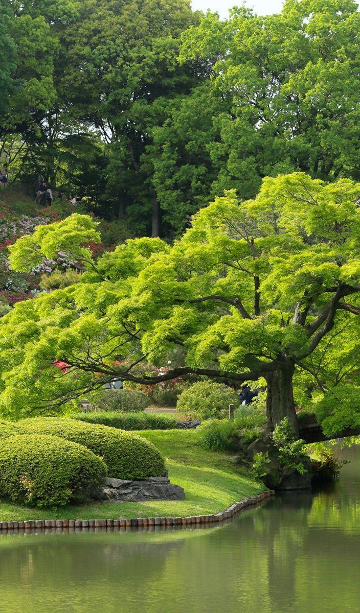 Jardim, Tóquio, Japão