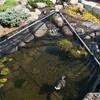 Fall And Winter Pond Products - Pond Deicers, Pond Heaters, Pond Netting