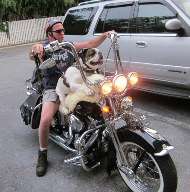 Another biker dog!  Have never seen one riding on the tank.