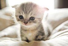 Bayi kucing lucu