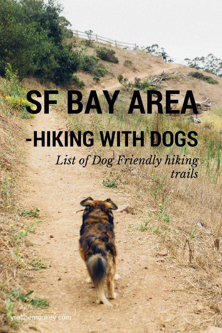 Dog Friendly Hikes Near Big Sur