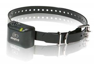 When to use a dog shock collar - ThatMutt.com: A Dog Blog