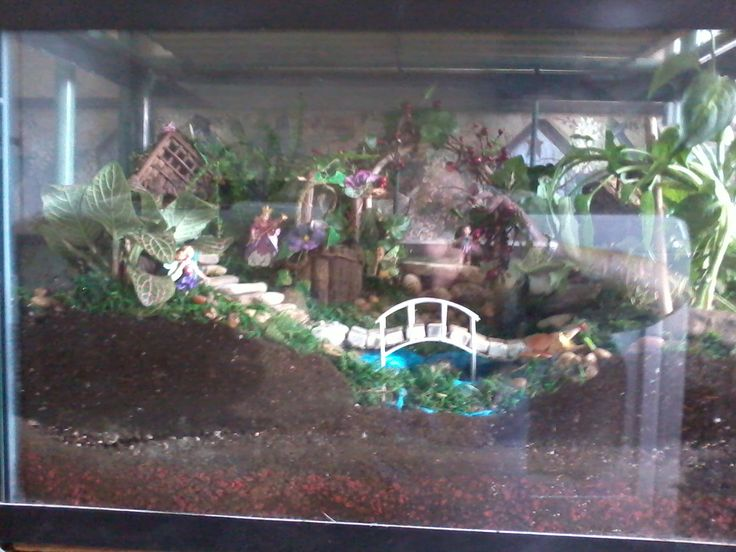 My fish tank fairy garden. | fairy garden ideas ...