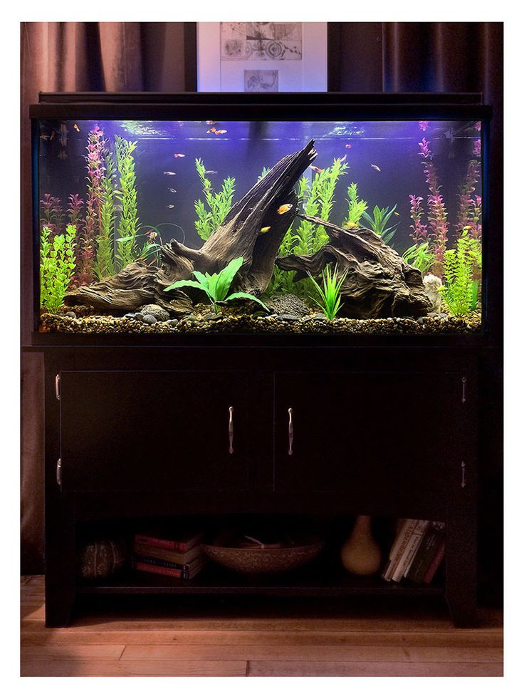 After umpteen trips to various stores for lighting, plants, fish and such, plus equally umpteen deliveries from Amazon for hardware, test kits, etc., this is where I am right now with my new tank. I wanted to create a possible scene from a lake bed in which the fish will have plenty of hiding places and hopefully feel at ease, with their comfort being my first priority, but I tried to balance that with a sort of purposely unkempt/wild look to everything (without looking like no thought was…