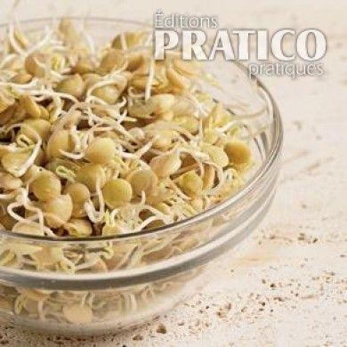 Comment+faire+des+germinations+maison+-+En+étapes+-+Cuisine+et+nutrition+-+Pratico+Pratique