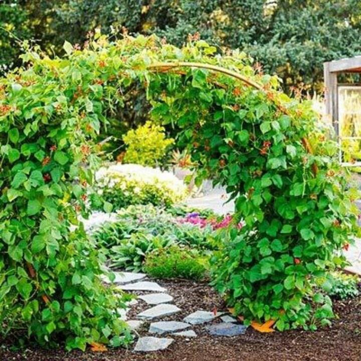 Diy Bean Trellis With Hog Wire Garden Trellis 400 x 300