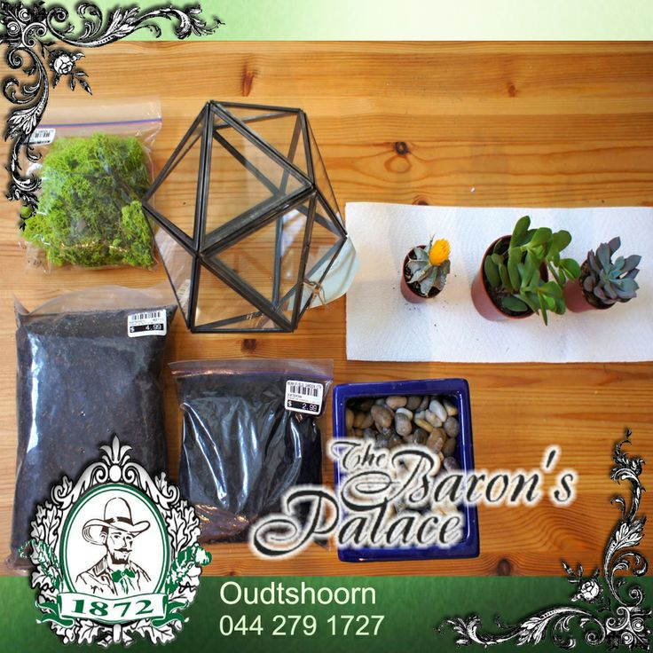 I love cacti because they never die. They're cute too, and come in a huge variety. So here's a look at the ingredients to this sweet mini garden. For more D.I.Y:  http://besociable.link/iu #Cactigarden #DIY #Cacti