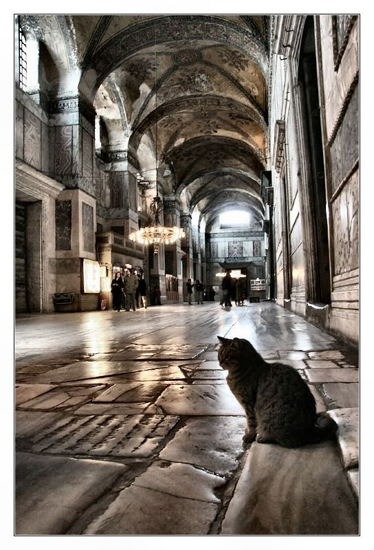 Looks like it was taken inside the Hagia Sophia cat and light, Istanbul by Anes_Ic