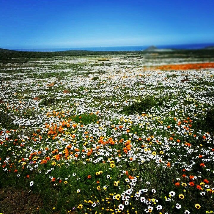 Postberg, Western Cape