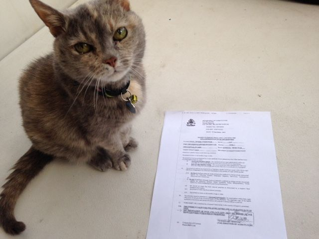 """Amelia posing with her permit. """"Can I take a nap now?"""" Mama was very proud...       (This is a long, boring rant about taking the cat t..."""
