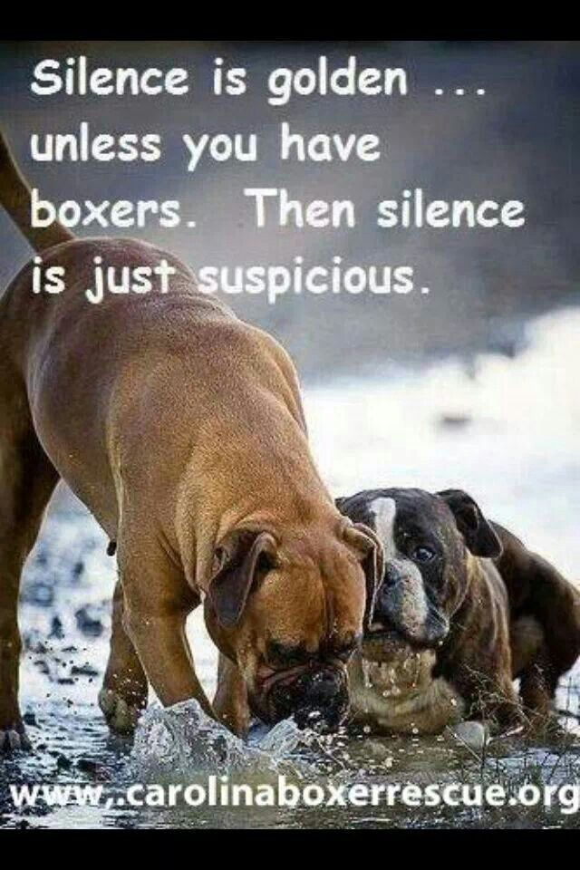 Silence with boxers is suspicious...