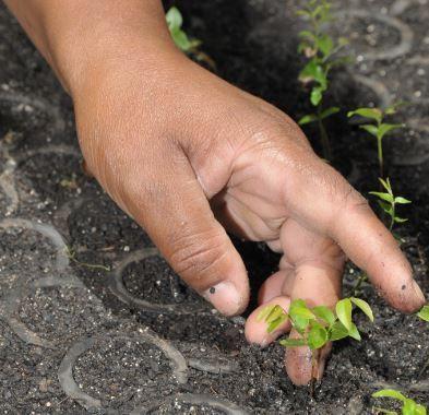 Restauração florestal da Fundação ultrapassa 36 milhões de mudas plantadas
