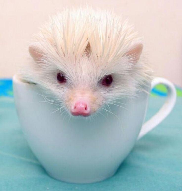 ♡☆ A Cuppa Me! ☆♡