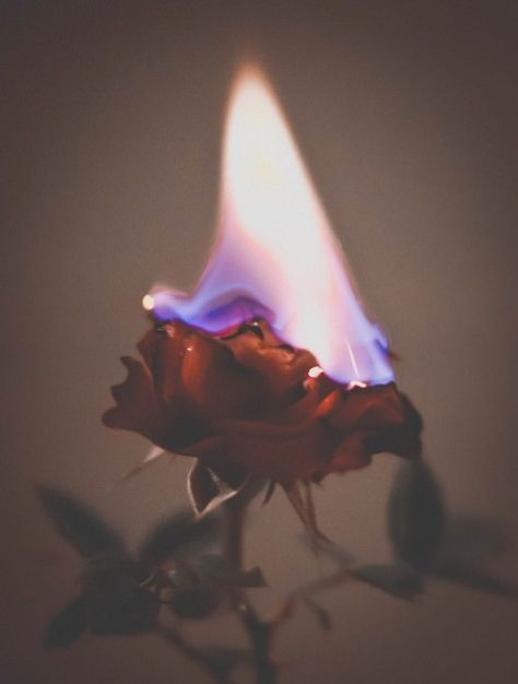 Rose On Fire Aesthetic Roses Aesthetic Photography