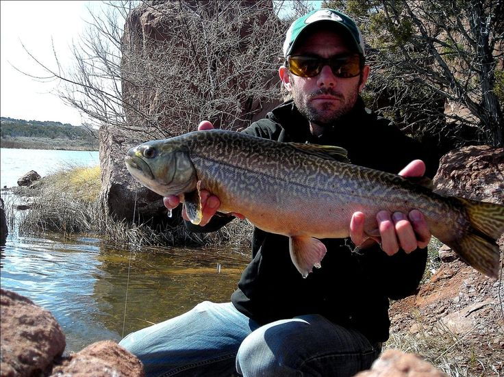 57 best tiger trout images on pinterest for Trout fishing utah