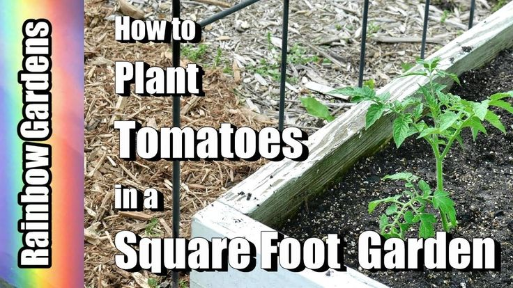 Lets plant tomatoes in only 6 inches of soil this is the
