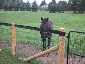Electric Fence Options For Horses
