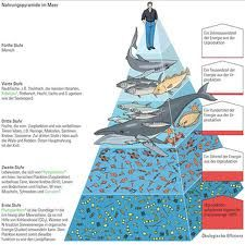 layers of the ocean ecosystem | Science- Unit 8- Ecosystems - Mrs. Sanford's 4th Grade Blog!