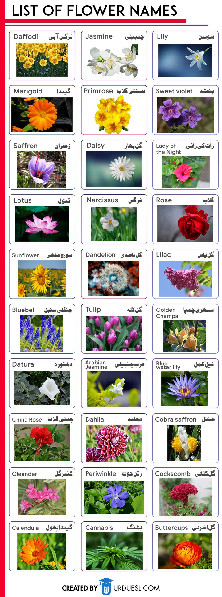 30 Flowers Name in English and Urdu with Pictures