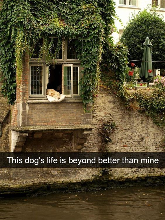 32 Funny Animal Pictures