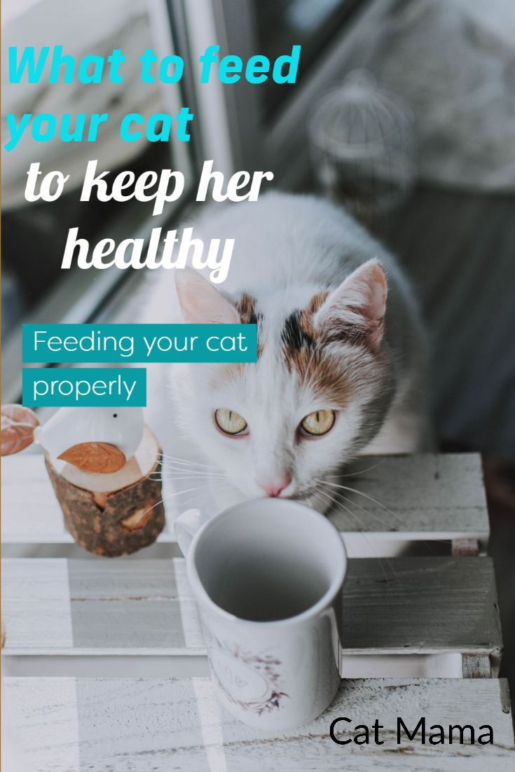 What Can I Feed My Cat To Keep It Healthy A Guide To Feeding Your Cat In 2020 Cat Diet Cat Food Brands Best Cat Food