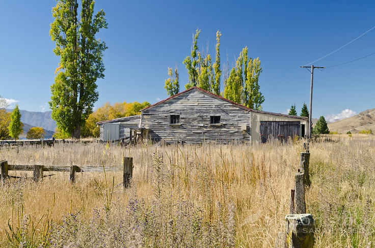 Old woolshed and poplar trees in the Waitaki Valley, Otago, South Island, New Zealand