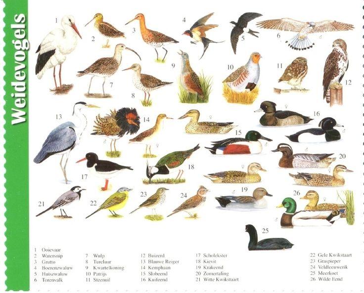 van der Meulen - wading birds