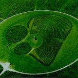 Los 4.000 árboles que componen este bosque se plantaron con motivo del 50.º aniversario de la Batalla de las Ardenas.