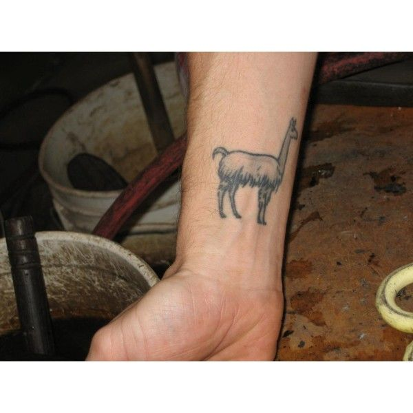 11 Best Images About Llama Tattoos On Pinterest