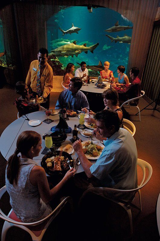 Sharks Underwater Grill at SeaWorld Orlando provides fine dining and a fascinating view in a full-service restaurant.