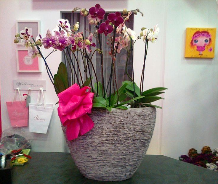 Orquídeas em vaso de cimento