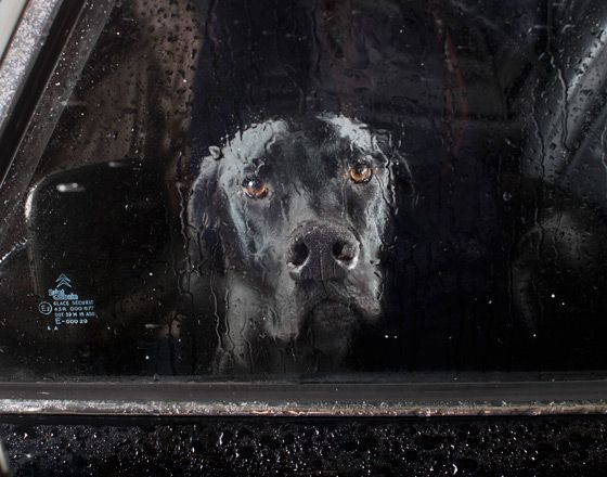 THE SILENCE OF DOGS IN CARS  BY ISABELLE RAPHAEL (click to see all)