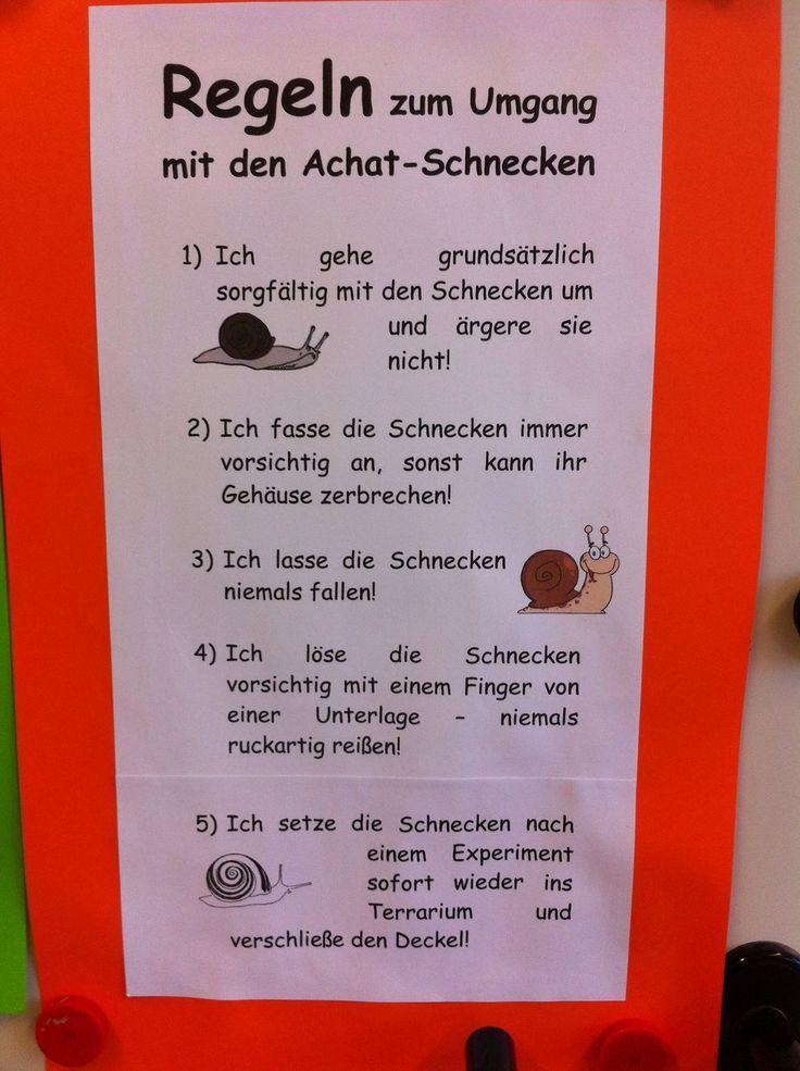 233 besten Sachunterricht Bilder auf Pinterest   Montessori ...