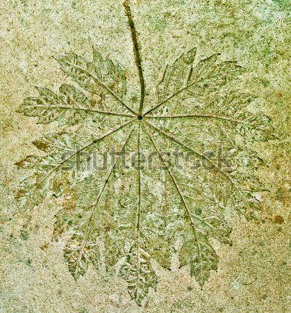 impresion de hojas en piso de cemento - Buscar con Google